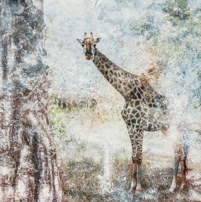 """""""Giraffa Camelopardalis"""". DANIEL RODRÍGUEZ CALVO"""