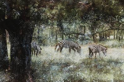 """""Equus Quagga (Cebra Común)"" DAROCA, DANIEL RODRÍGUEZ"