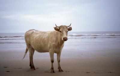 """""""La playa""""06, 2006. EDUARDO MARCO"""